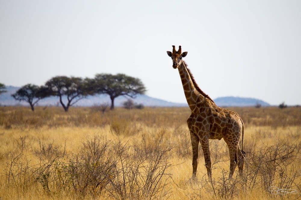 Un charmant safari tanzanie luxe