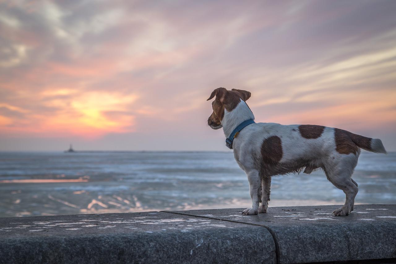 Comment retrouver son chien perdu
